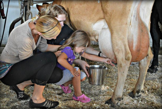 Learn how to milk a cow at Hull-O-Farms.